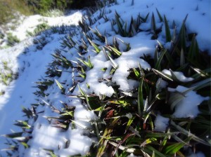Mount-Field_national-park_bush-and-snow